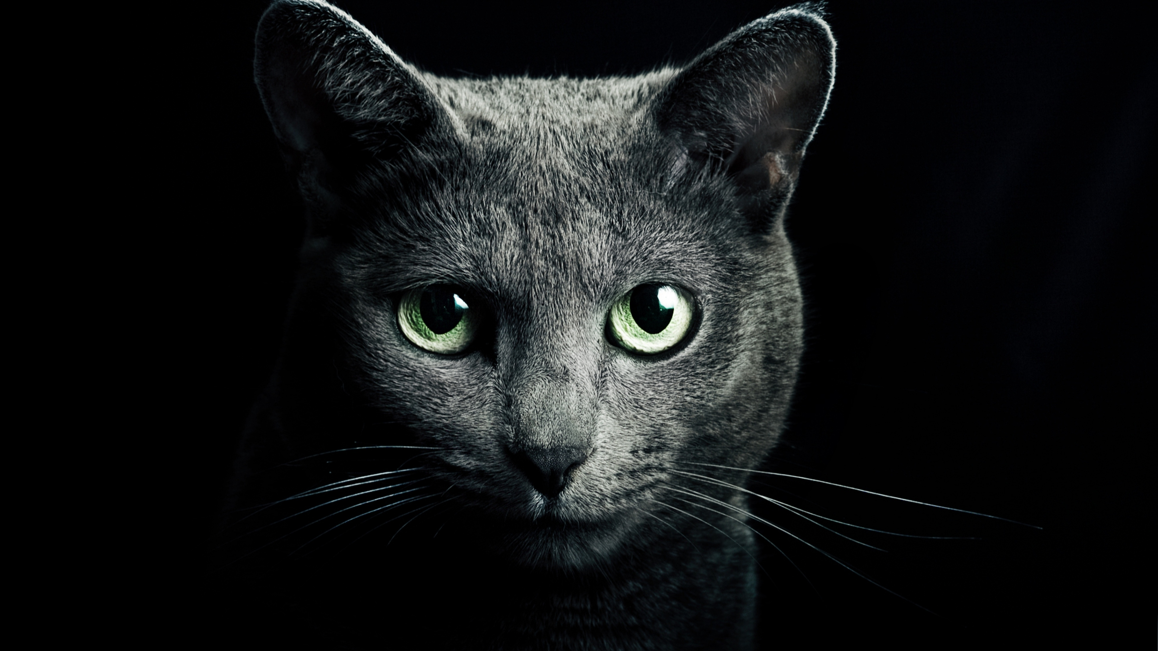 Wallpaper 38402160 Cat Black Breed Russian Blue Eyes Green Eyes